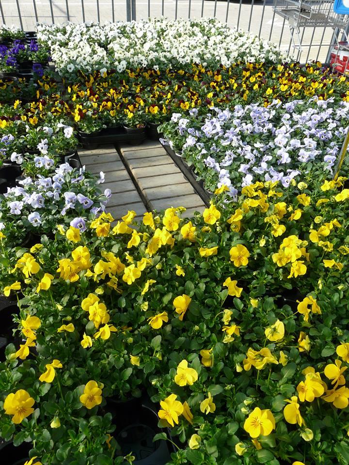 Tuincentrum Kennes nabij Heist op den Berg; voor al uw levend groen!