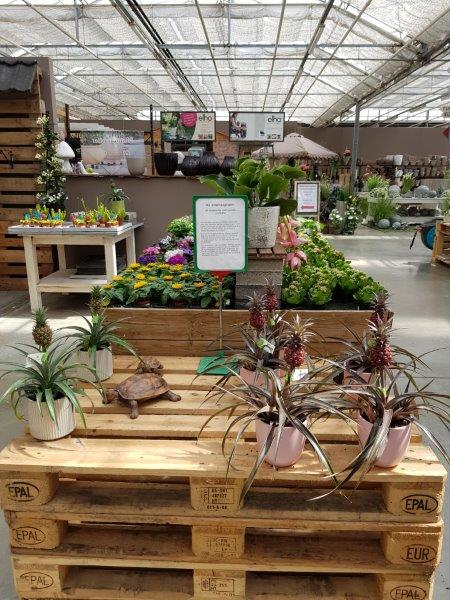 Planten Kontich: kamerplanten