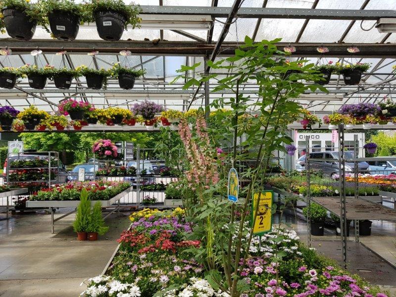Planten Kontlich: buitenafdeling