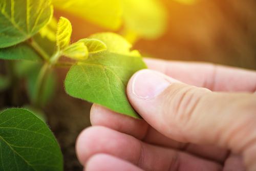 Plagen en gewasbescherming online bestellen | Tuincentrum Kennes