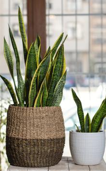 Woonaccessoires online bestellen | Kamerplanten | Tuincentrum Kennes