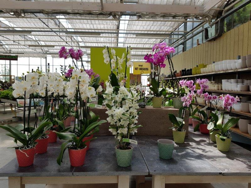 Orchidee kopen in Lier?