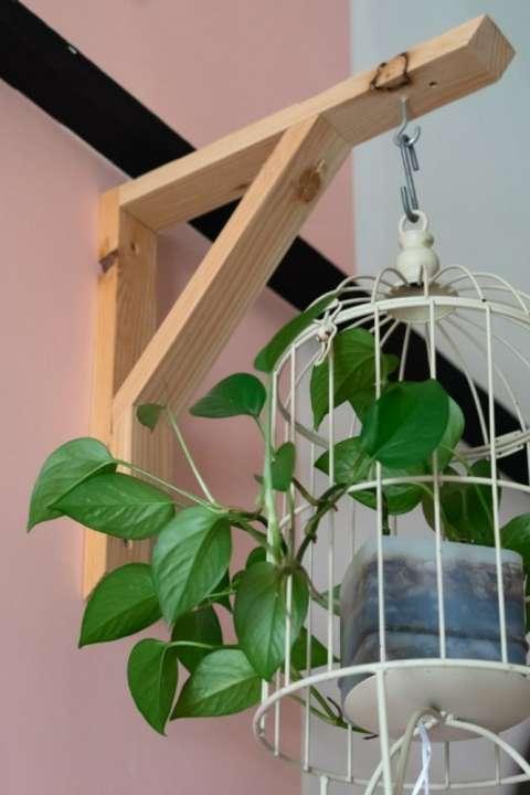 unieke-hangplant-kopen