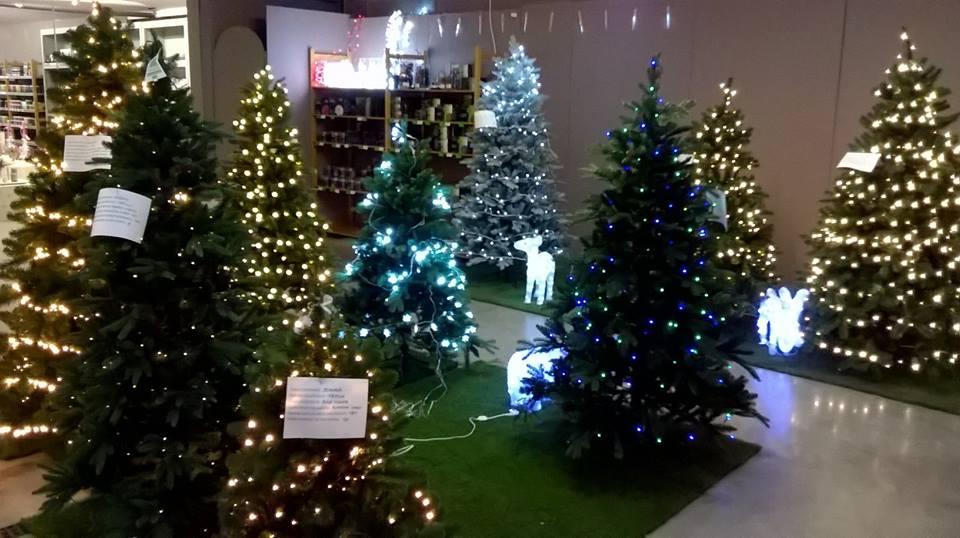 Kerstboom kopen in Lier
