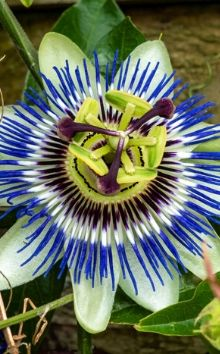 Tuinplanten kopen | Tuincentrum Kennes | Lier