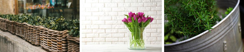Bloempotten en plantenbakken kopen bij Tuincentrum Kennes in Lier