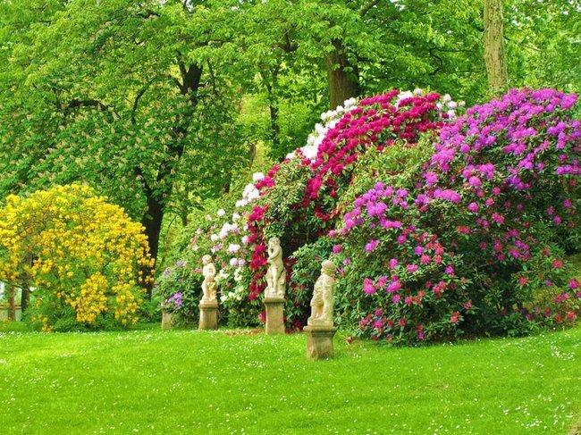 Struiken Met Bloemen Voor In De Tuin.Bomen Heesters En Coniferen Tuincentrum Kennes Kennes