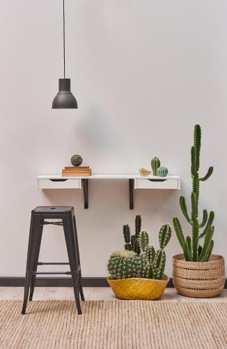 Cactussen & Vetplanten | Tuincentrum Kennes in Lier