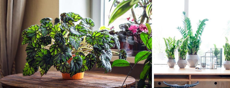 Groene kamerplanten kopen bij Tuincentrum Kennes in Lier, nabij Antwerpen