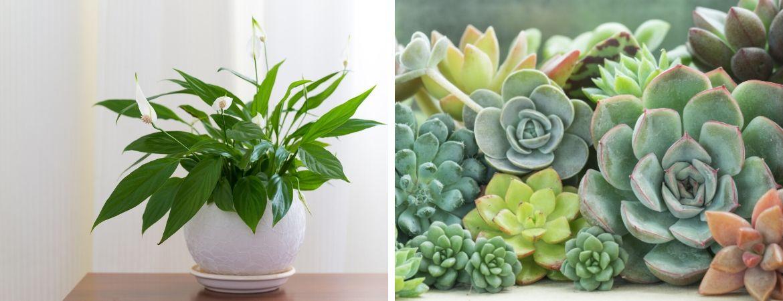 Kamerplanten kopen bij Tuincentrum Kennes in Lier