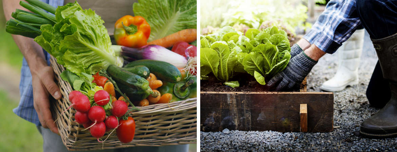 Groente planten Tuincentrum Kennes