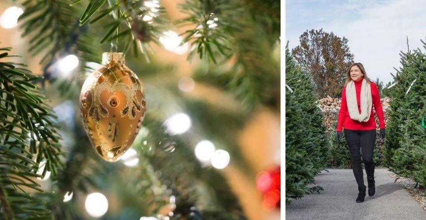 Tuincentrum Kennes | Lier | Kerstbomen